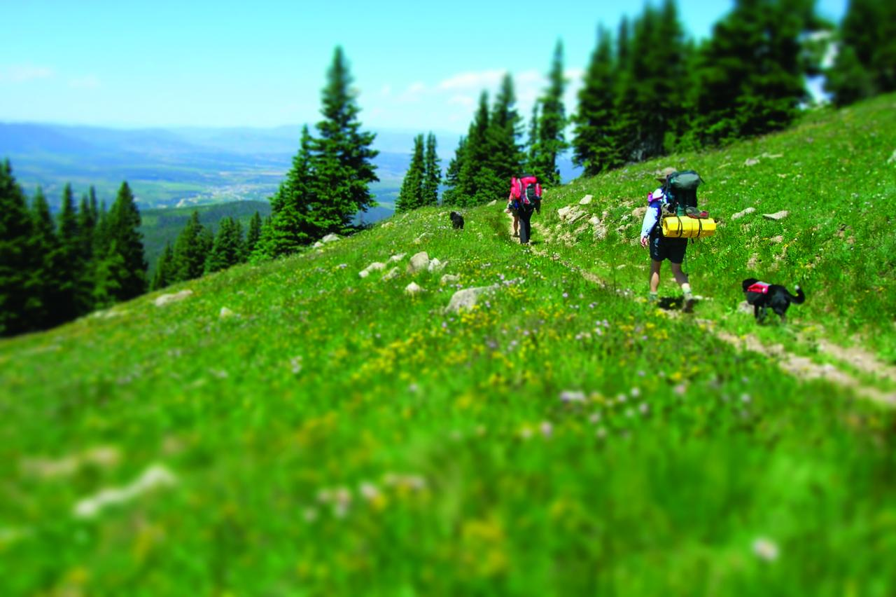 Pet-Friendly Hiking and Backpacking Trails in Winter Park, Colorado