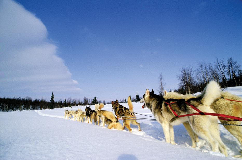 Take a dog sled ride through Winter Park, Colorado
