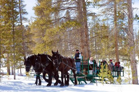 Winter Horse-Drawn Sleigh Rides Colorado