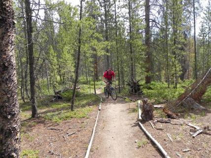 Summer hiking, biking and dog-friendly trails