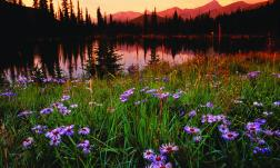 Mountain Lake & Meadow in Winter Park, Colorado