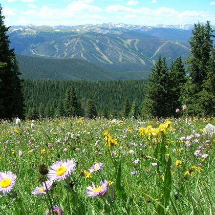 Wildflower meadow in Winter Park, Colorado