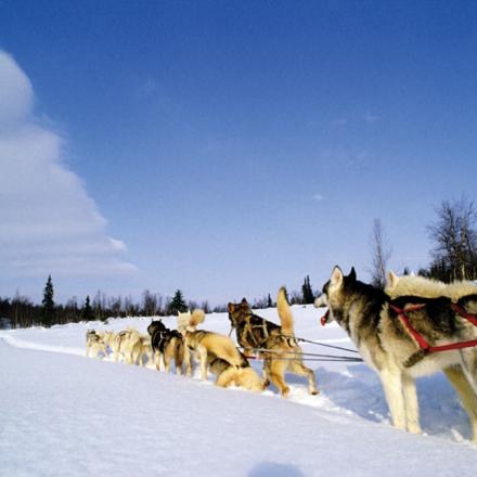 Dog Sled Rides in Winter Park, Colorado