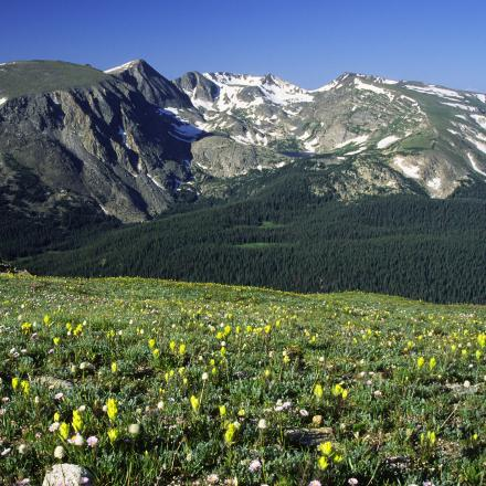 Wildflowers in Rocky Mountain National Park