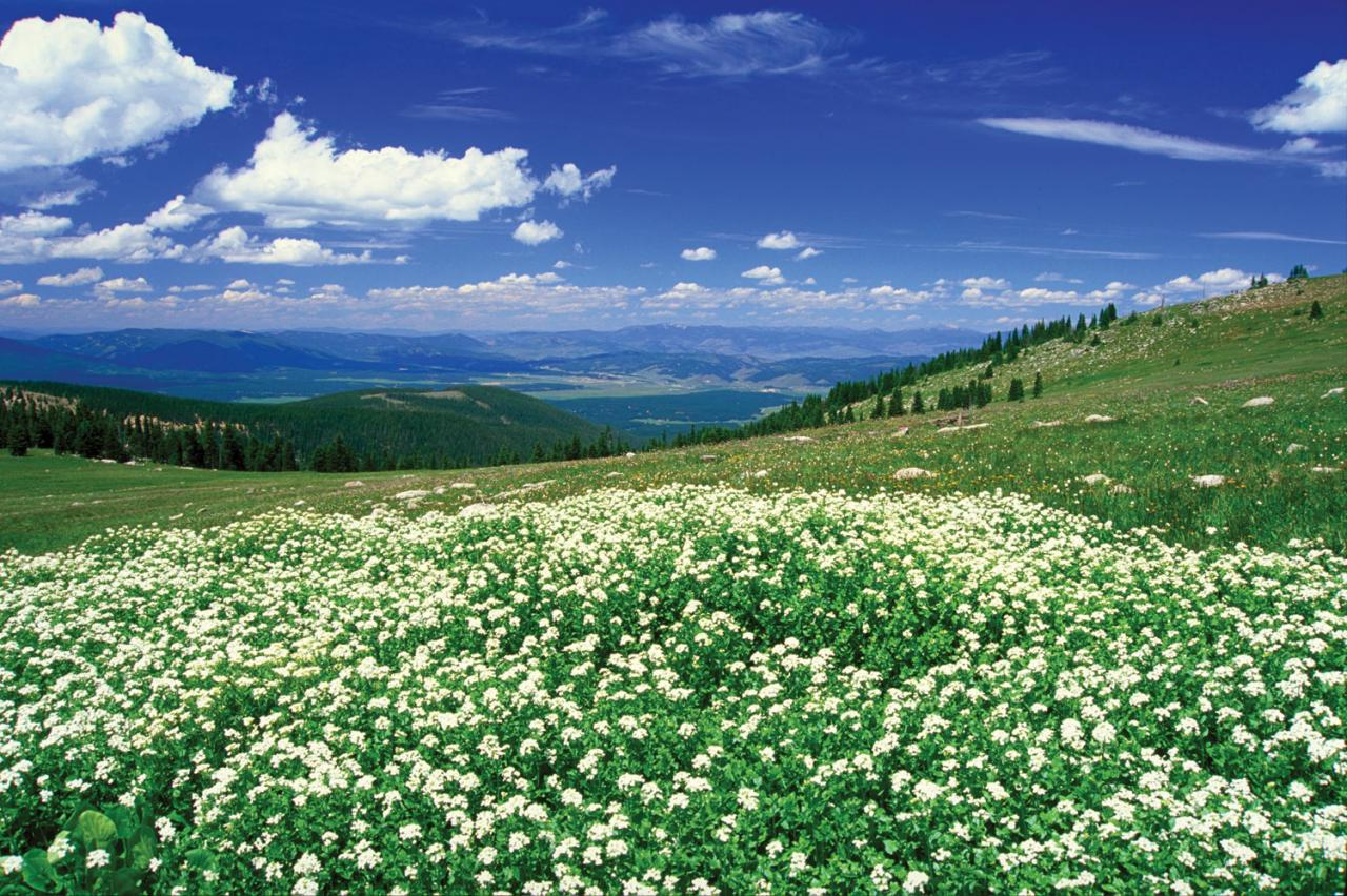 Fraser Valley Meadow with wildflowers near Winter Park, Colorado