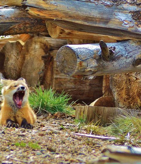 Wildlife in Winter Park, Colorado