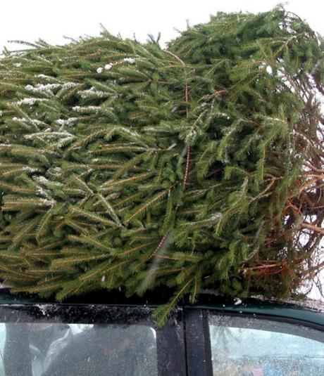 Christmas Tree Cutting Permits