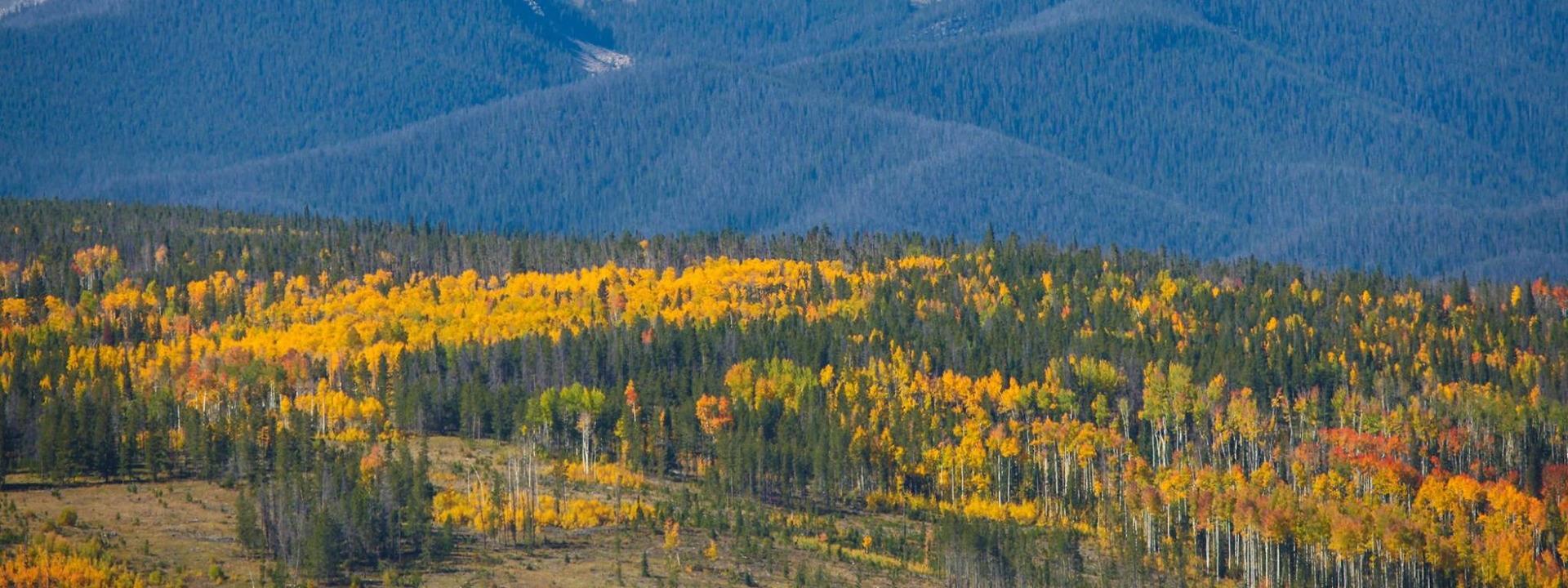 Byers Peak in Fall near Winter Park, Colorado
