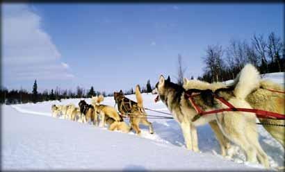 dog sled rides of winter park - 720×480