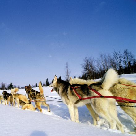 Take a dog sled ride through Winter Park, Colorado