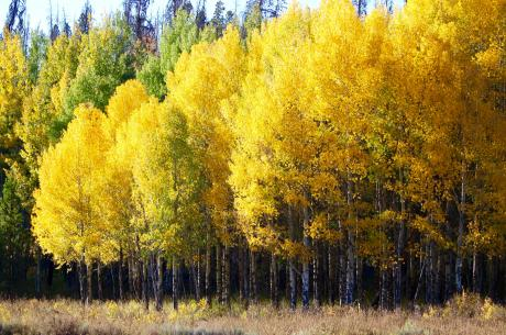 Fall Colors in Winter Park, Colorado