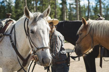 Winter Park Horseback Rides