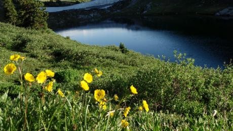 Rollins Pass Alpine Lake With Yellow Flowers near Winter Park, Colorado